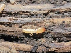 白アリの被害は予測できません